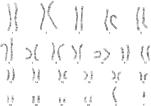 An illustration of the 24 human chromosomes